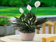 Nhà đẹp - Hà Nội đang ô nhiễm và đây là 5 loại cây giúp thanh lọc không khí trong nhà