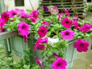 Nhà đẹp - Tiết trời hiu lạnh, chị em đừng quên sắm một giò hoa rực rỡ nhất mùa đông