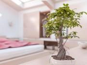 Nhà đẹp - Vị trí đặt cây cảnh phong thủy cho tiền trôi vào túi