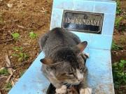 Tin tức - Cảm động chú mèo cả năm nằm trông mộ chủ suốt ngày đêm