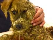 Tin tức - Phẫn nộ cảnh chú chó bị đổ keo vào lông, nhúng xuống bùn làm trò chơi