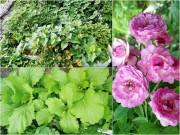 Nhà đẹp - Mẹ 7x biến nóc chung cư thành vườn rau xanh mướt ăn cả năm chẳng hết