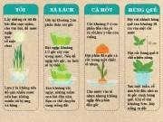 Nhà đẹp - 10 loại rau củ trồng từ gốc bỏ đi, lớn nhanh vùn vụt, ăn cả năm chả hết