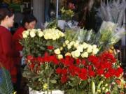 Mua sắm - Giá cả - Hoa Đà Lạt sẽ tăng giá mạnh dịp lễ 20-11