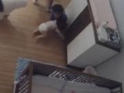 Clip Eva - Anh 9 tuổi dũng cảm đỡ em bé rơi từ trên bàn trong chớp mắt
