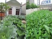 Nhà đẹp - Mẹ Việt tận dụng từng góc sân thượng để trồng rau cải thiện bữa ăn gia đình