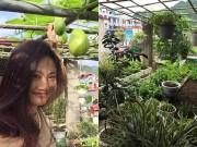 Nhà đẹp - Khu vườn đủ các loại rau quả, hoa cỏ từ thùng xốp của mẹ Việt