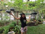 Nhà đẹp - Cách trồng bí ngô trên giàn trĩu quả của mẹ Việt tại Malaysia