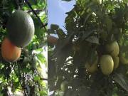 Nhà đẹp - Cô giáo về hưu tiết kiệm tiền triệu mỗi tháng nhờ vườn rau sân thượng
