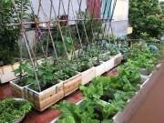Nhà đẹp - Cô giáo làng 10 năm không tốn tiền mua rau nhờ vườn sân thượng
