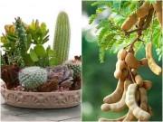 Nhà đẹp - Những loại cây cực xui xẻo, tuyệt đối không trồng nếu không muốn mất tiền