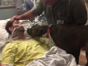 Tin tức - Nhói tim khoảnh khắc chú chó tạm biệt chủ nằm bất động trên giường bệnh