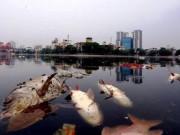 Tin tức - Công bố 4 nguyên nhân cá chết hàng loạt tại các hồ ở Hà Nội