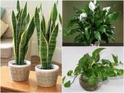 Nhà đẹp - Top 9 cây cảnh lọc không khí nên trồng trong nhà