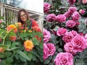 Nhà đẹp - Choáng ngợp trước thiên đường 600 loại hoa hồng của nữ thạc sĩ tài năng