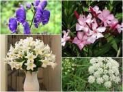 Nhà đẹp - 6 loại hoa đẹp xuất sắc nhưng chứa chất kịch độc gây chết người