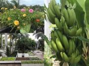 Nhà đẹp - Ngưỡng mộ khu vườn chẳng thiếu cây gì của mẹ bỉm sữa Miền Tây