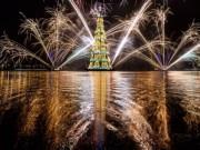 """Tin tức - Những cây thông Noel """"độc"""" nhất Giáng sinh 2016"""