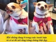 15 bức ảnh chứng minh người yêu có thể không có nhưng chó nhất định phải có 1 con