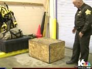 Tin tức - Cặp vợ chồng nhốt con trai 3 tuổi trong thùng gỗ chứa đầy côn trùng