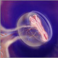 Sự phát triển của thai nhi: Tuần 5