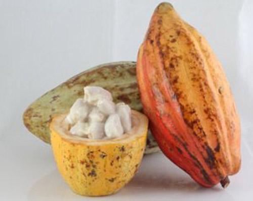 Lạ miệng cacao dầm đá - 2