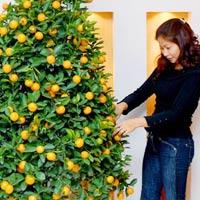 Cách chọn cây quất đẹp, đầy tài lộc