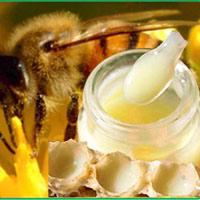 Sữa ong chúa giúp phát triển đại não thai nhi