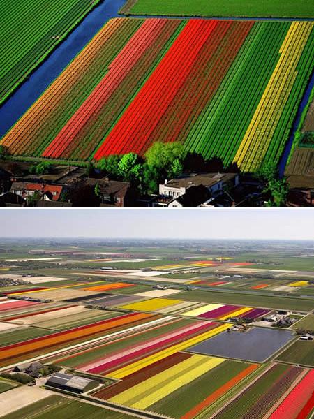 Những cánh đồng đẹp mê mẩn trên thế giới - 1