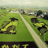 Những cánh đồng đẹp mê mẩn trên thế giới