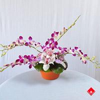 Kỹ thuật chăm sóc hoa Lan