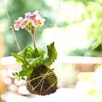 Khéo tay: Hoa treo độc đáo bên cửa sổ