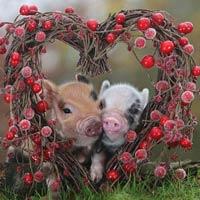 1001 cách yêu của động vật