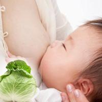 Lá bắp cải giảm căng sữa hiệu quả