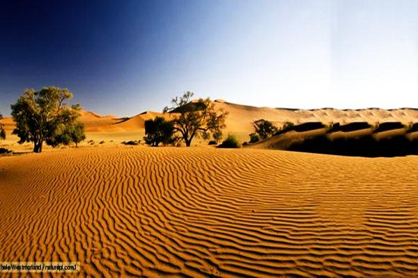Những loài cây kỳ quái chẳng sợ sa mạc - 1