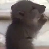 Kỳ lạ chú chuột chắp tay lạy phật