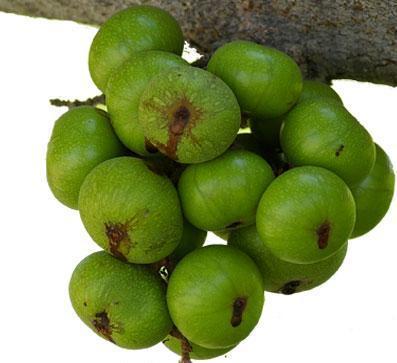 9 thực phẩm trị táo bón cho mẹ bầu - 1