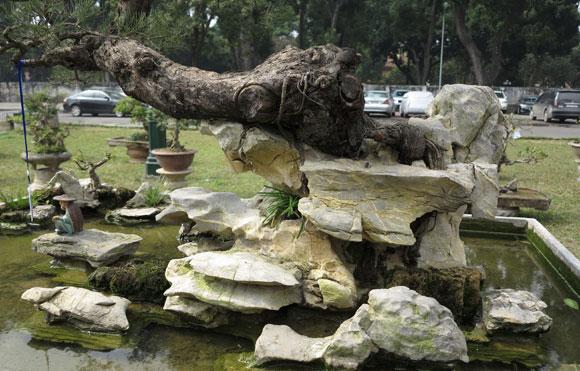 Ngây ngất lạc trong vườn cây cảnh bạc tỉ-12