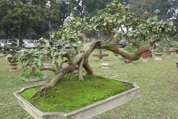 Ngây ngất lạc trong vườn cây cảnh bạc tỉ-15