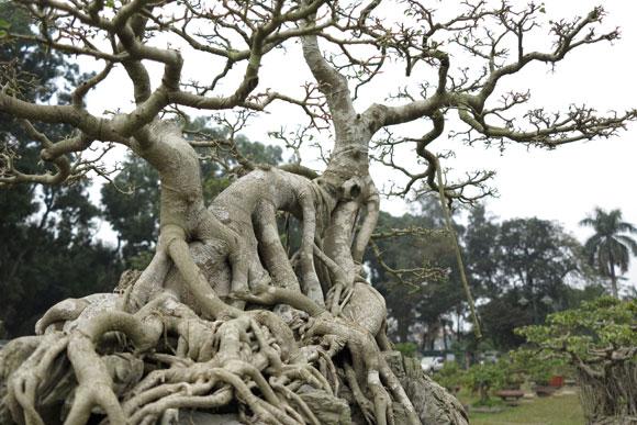 Ngây ngất lạc trong vườn cây cảnh bạc tỉ-3