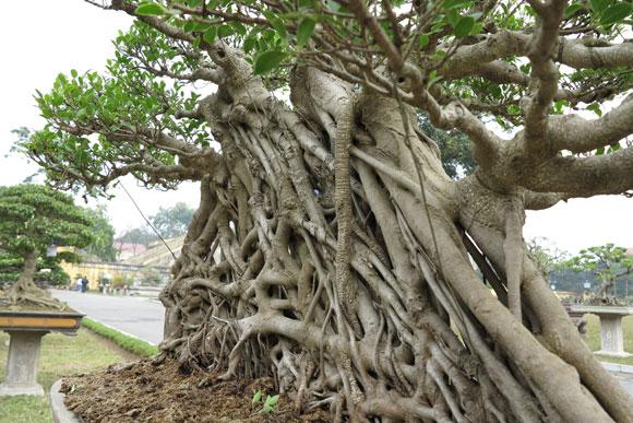 Ngây ngất lạc trong vườn cây cảnh bạc tỉ-5