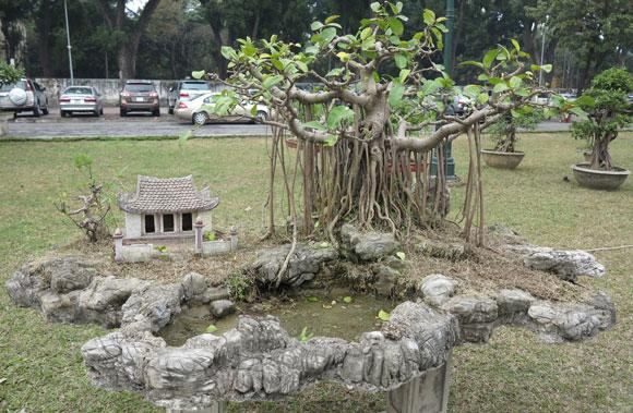 Ngây ngất lạc trong vườn cây cảnh bạc tỉ-6
