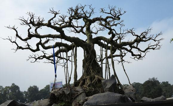 Ngây ngất lạc trong vườn cây cảnh bạc tỉ-7