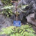 Tin tức - Thương lái Trung Quốc mua cả cây... không tên