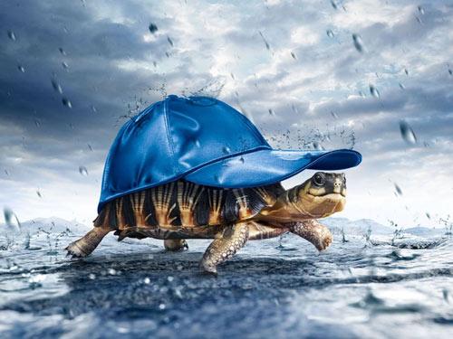 Truyện cổ tích: Rùa và Bò Cạp - 1