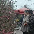 Tin tức - Giá quất, đào Tết giảm khoảng 5%