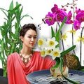 Nhà đẹp - Những loại cây, hoa may mắn nhất Tết Quý Tỵ
