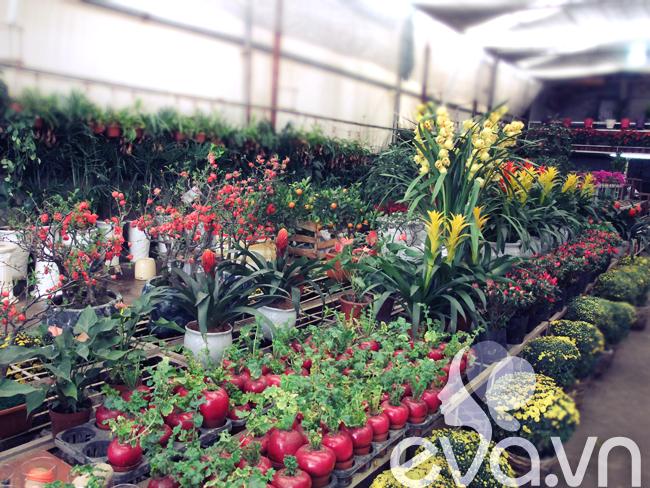 Những ngày này, hoa, cây cảnh phục vụ cho Tết ở khắp nơi đã tràn ngập trên các đường phố Hà Nội, được bày bán tại các chợ, trung tâm thương mại, thậm chí ở nhiều điểm vỉa hè cũng được tận dụng để bày bán.
