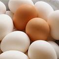 Sức khỏe - Những cấm kỵ khi cho trẻ sơ sinh ăn trứng gà
