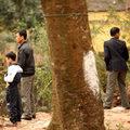 Tin tức - Hội Lim nhếch nhác vì tè bậy, xả rác